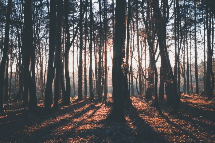 The Surprising Benefits of Thinking Like ATree